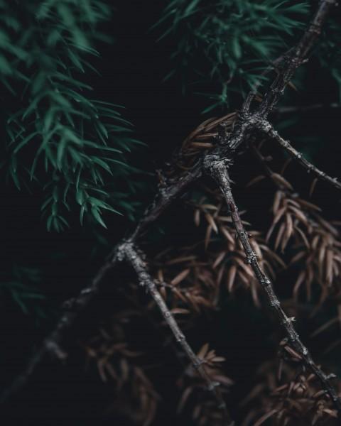 Dark CB Background HD