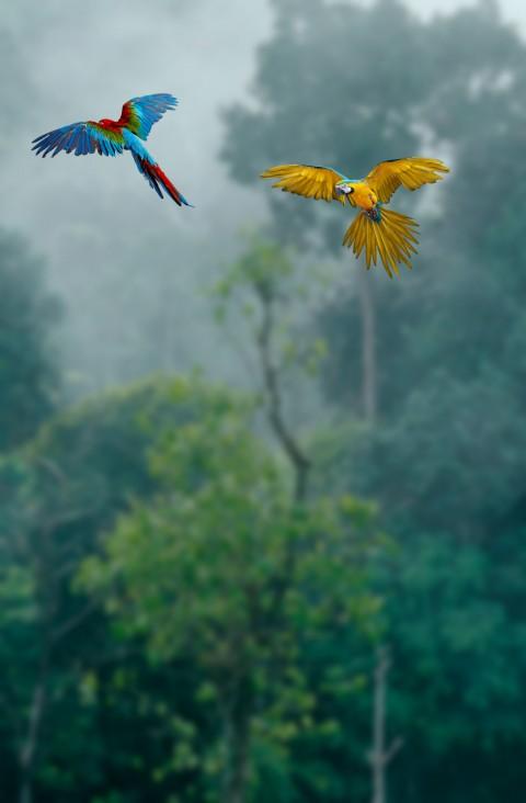 Save birds Editing Backgroun