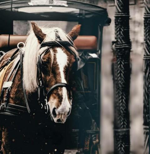 Vijay mahar horse Editing Pi