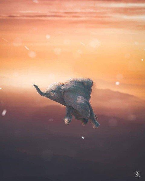 Prateek Pardesi elephant Editing PicsArt Background HD06