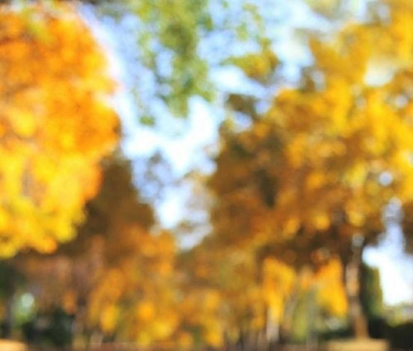 CB Background HD Editing Pic
