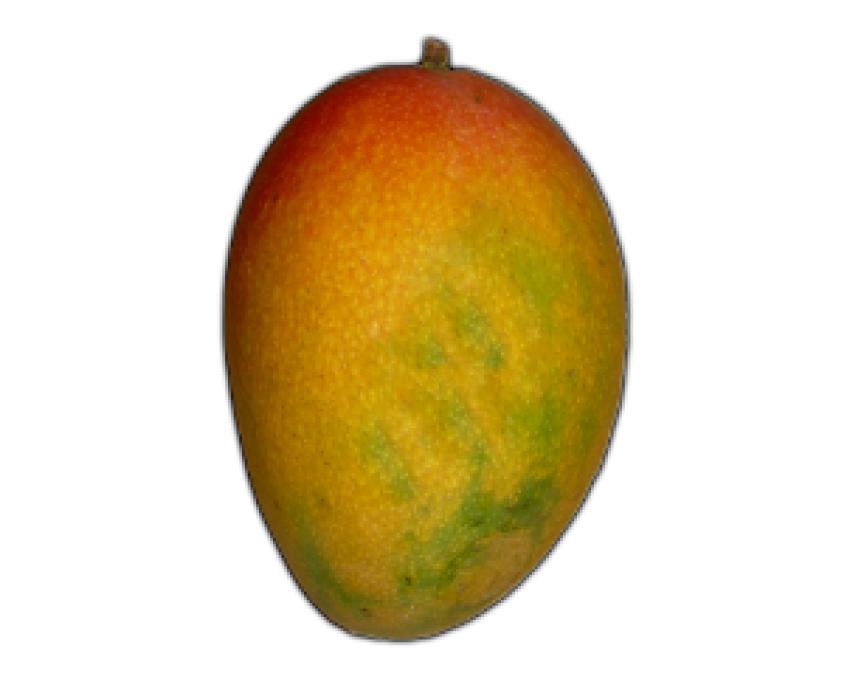 Mango PNG Vector HD image 07