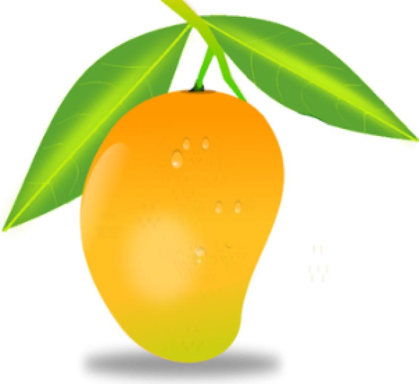 Mango PNG Vector HD image 01