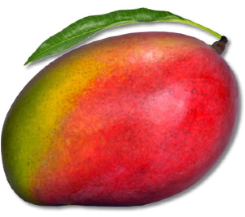 Mango PNG Vector HD image 08