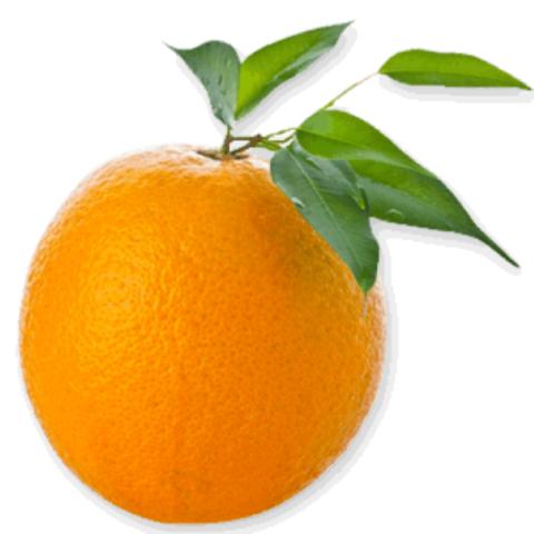 Orange PNG Vector Image HD (