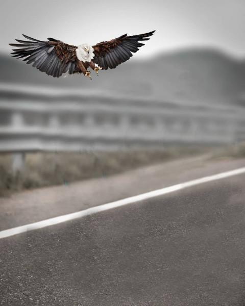 Bird Editing background HD