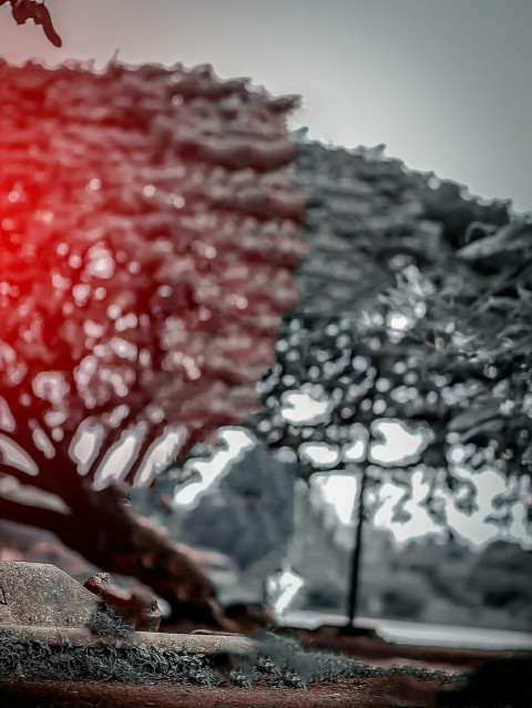 CB Tree.