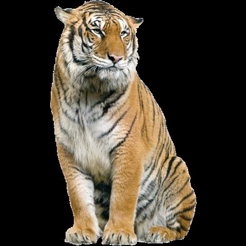 Tiger PNG - Cheetah (2)