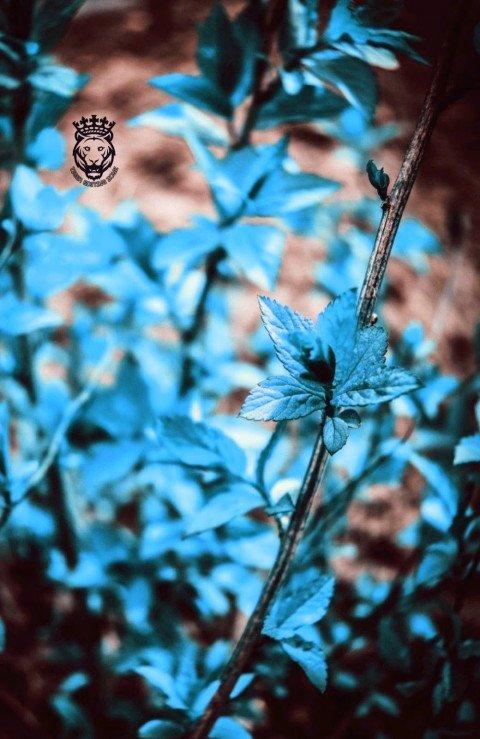Beautiful blue colour leaf C