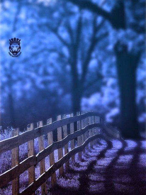 Blue colour blueish garden C