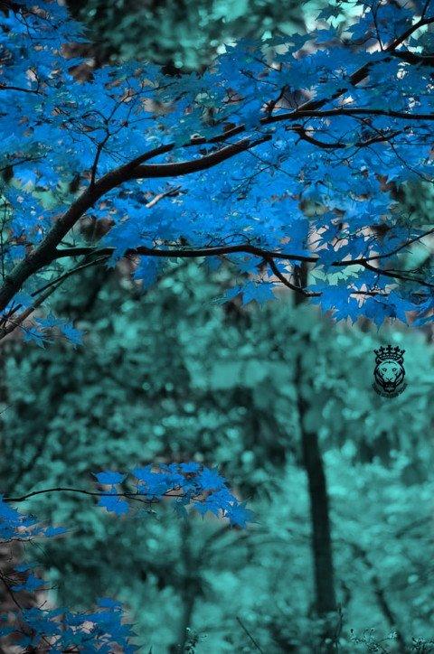 Blue red tree CB Picsart Edi