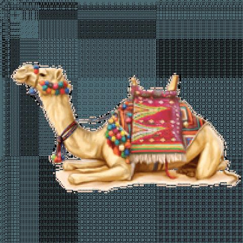 Sitting Camel PNG - Transpar