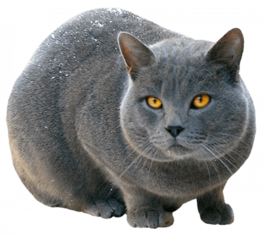 🔥 Sitting Pussy Cat PNG - Transparent Images   image free