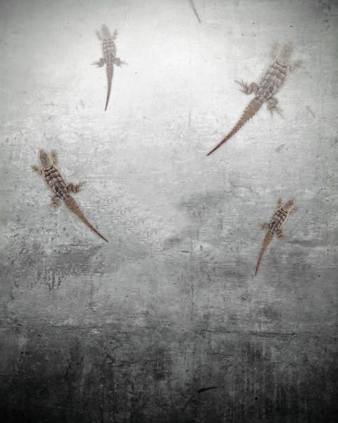 Lizards Horror Editing Backg
