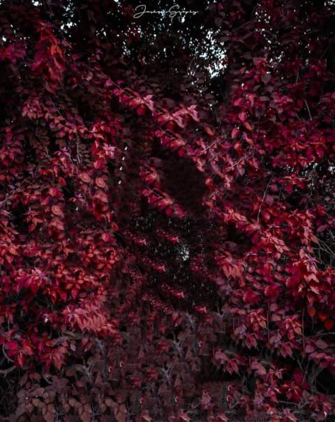 Flowers Vijay Mahar Editing