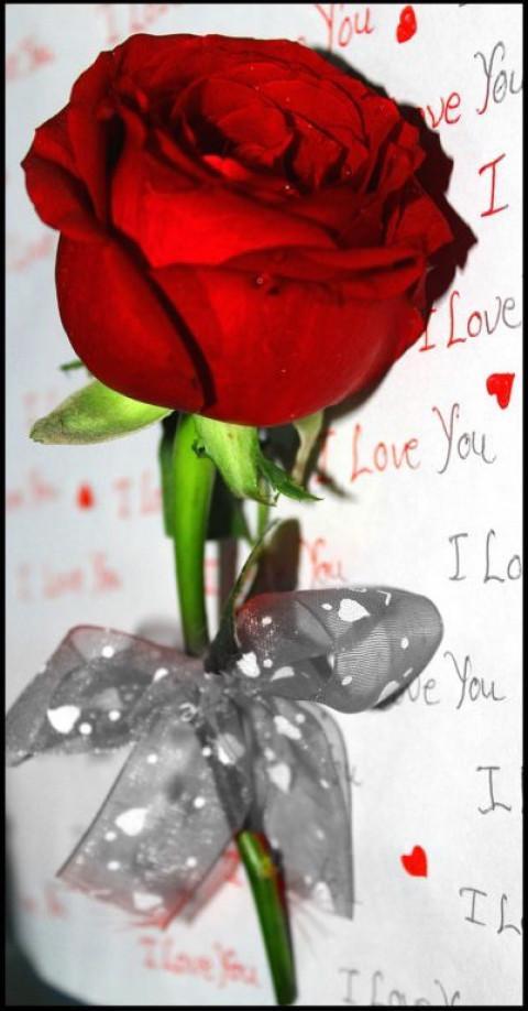 20 Latest Girls Dp For Rose Day Alice T Jones