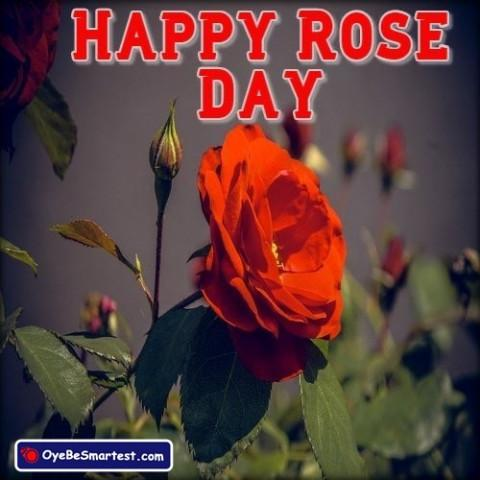 Happy Rose Day 2020 Image HD