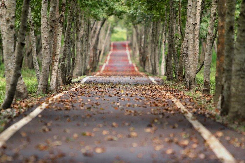 Natural forest deserted road