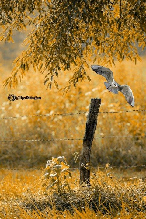 Natural yellow grass white b