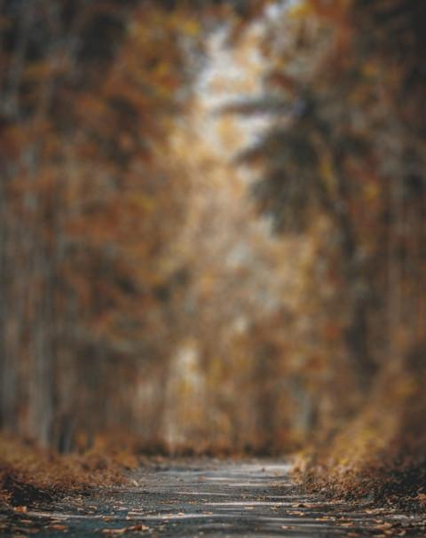 Forest Blur CB Background Ed