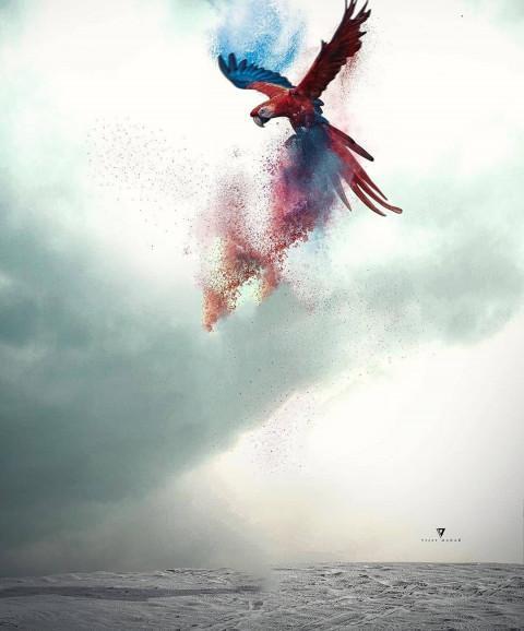 Vijay Mahar Bird Wings Editing Background Full Hd Picsart Image Free Dowwnload