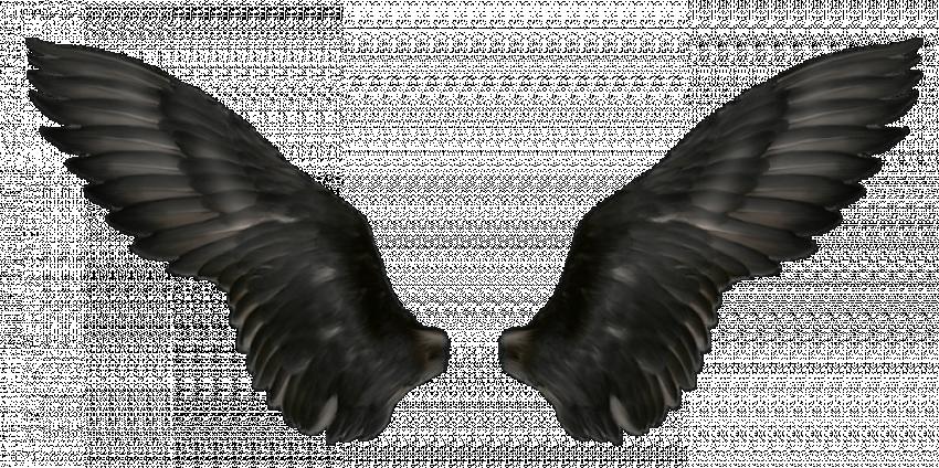 Bird (Angels) Wings PNG - Tr