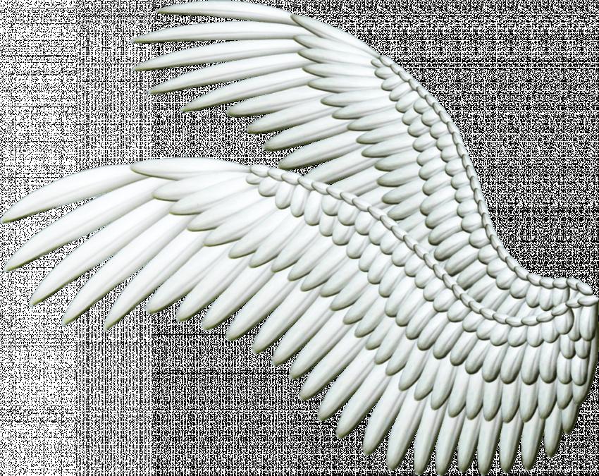 White Wings PNG - Transparen