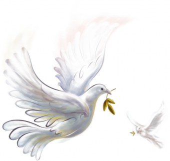 White Pigeon PNG Transparent