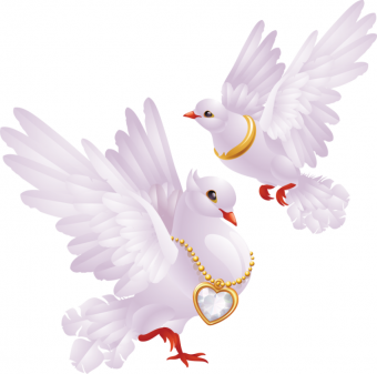 couple two Pigeons White PNG