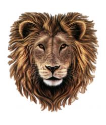 Lion Head PNG CLipart HD