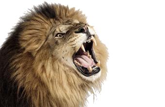 Roaring Lion HD PNG