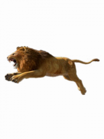 African Lion Ruuning PNG HD