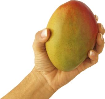Mango PNG Vector HD image 21
