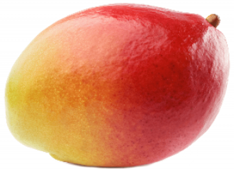 Mango PNG Vector HD image 05