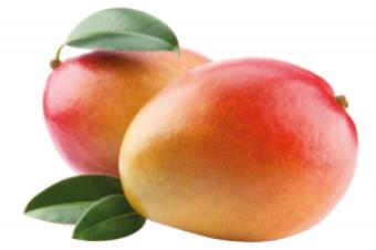 Mango PNG Vector HD image 04