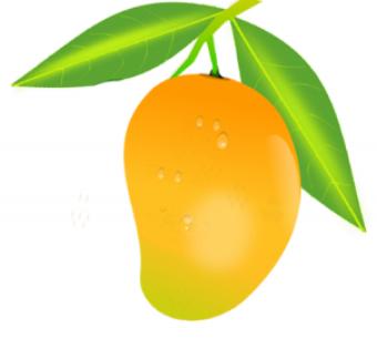 Yellow Mango PNG Vector HD i