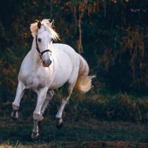 Vijay Mahar Horse Editing ba