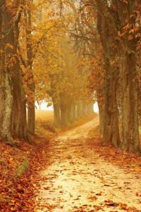 Autumn autumn colours brown