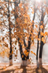 Autumn season yellow colour