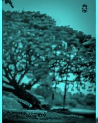 Blueish drie tree CB Picsart