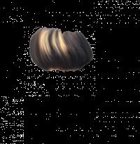 Hair PNG HD Editing PNG Phot