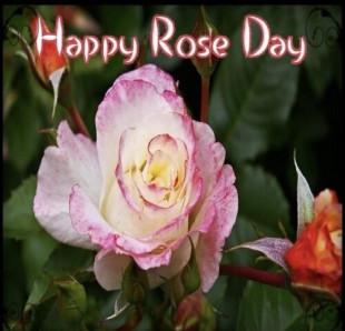 Happy Rose Day Wish Status P