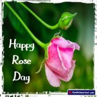 Rose Day 2020 for Valentine'