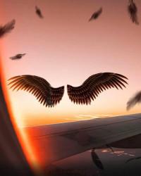 Vijay Mahar Bird wings Editi