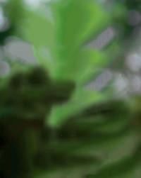 Green Blurred Editing Backgr