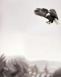 Vijay Mahar eagle bird Editi