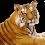 Sitting Tiger PNG - Cheetah (2)