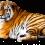 Sitting Tiger PNG - Cheetah (12)