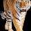 Standing Tiger PNG - Cheetah (1)