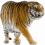 Tiger PNG - Cheetah (7)
